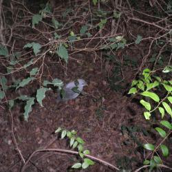 Oiseau Province Sud de la Nouvelle Calédonie mai 2018 Photo Fabienne